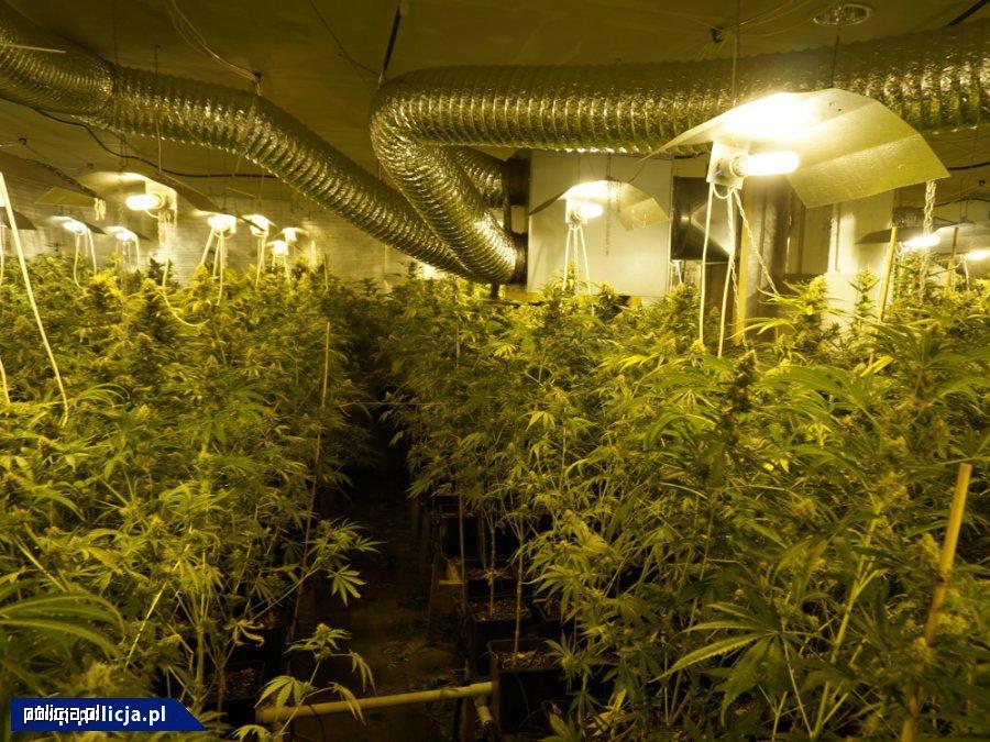 Dwupoziomowa plantacja marihuany zlikwidowana przez CBŚP na Śląsku