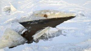 Przerębel w lodzie